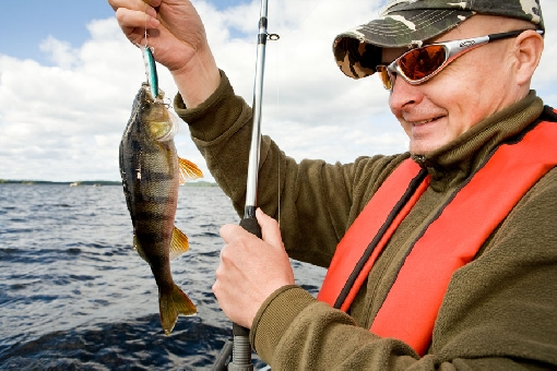 In summer, perch move around the surface waters in mid-lake areas, where good catches are made by trolling.