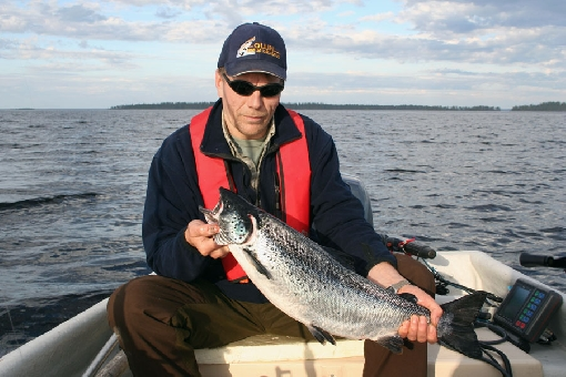 Landlocked salmon is one of the most sought-after game species when trolling.