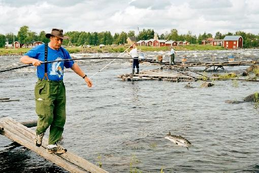 рыбалка прикормка для озерной рыбы