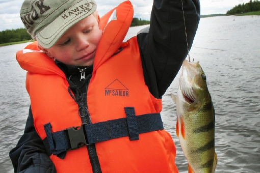 Big perch are eager to strike bait in the Luoto Archipelago.