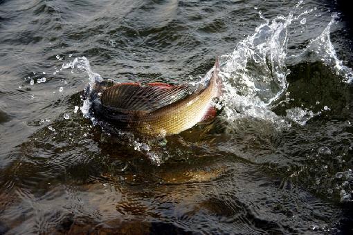 harjuksen kalastus aika