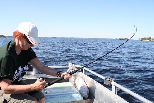 taimenen kalastus joesta