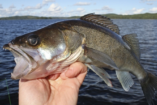 Fishing Degree approved: new minimum sizes and closed seasons