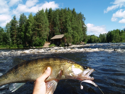 Rivers central finland rapids for Fishing in finland