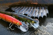 Plugs are the most popular zander lures for trolling. (Risto Jussila)