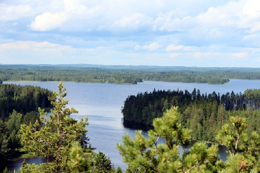 Winding bays and pine forest islands are part of landscape in Lake Kivijärvi.
