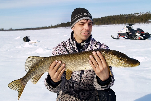 Pike can be found in the wilderness lakes of Muotkatunturit Hills. Inari.