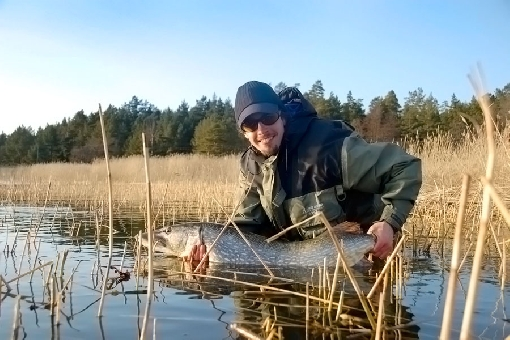 The most funniest way to catch pike is fish from shallow waters.