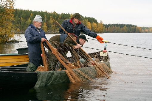 Seine net is one of the oldest fishing tackle. Seine fishing presentations and programmes are arranged in different parts of Finland.