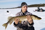 Pike can be found in the wilderness lakes of Muotkatunturit Hills. Inari. (Jari Tuiskunen)